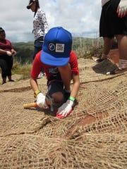 In this file photo, a Ridge to Reef Pago Adventure participant secures a jute fiber mat to loose soil in an effort to aid vegetative growth and reduce erosion.