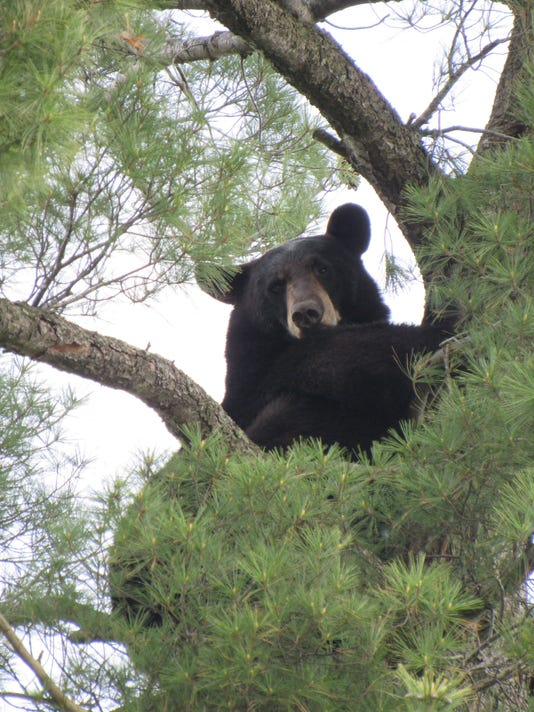 Best-Bear-Photo.JPG