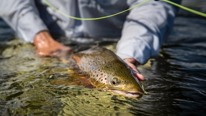 A fisherman is successful with a Winston fly fishing
