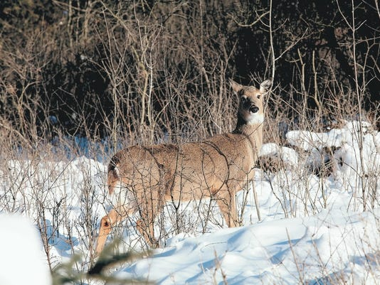 636518819061874660-Deer-in-snow.jpg