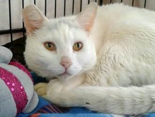 Wesley is a darling 10-year-old fellow who is shy,