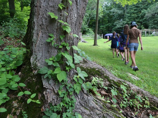 Campers at Teatown Lake Reservation in Ossining walk in the background, as a tree with poison ivy at the base is pictured in the foreground, July 10, 2015.