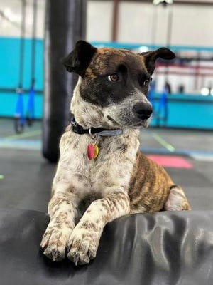 """Maggie """"on the job"""" at Day One Fitness in Beech Island."""