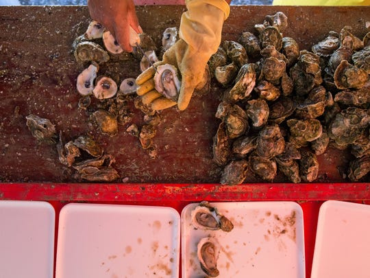Bags of oysters are shucked during the 37th Annual Fulton Oysterfest in Fulton Texas, Saturday, Mar. 5, 2016.