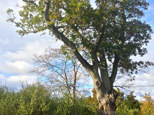 The Devil's Tree is located in Bernards.