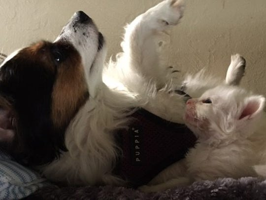 Bitsy, Megan Sorbara's dog, has adopted Coconut and her brothers as her own.