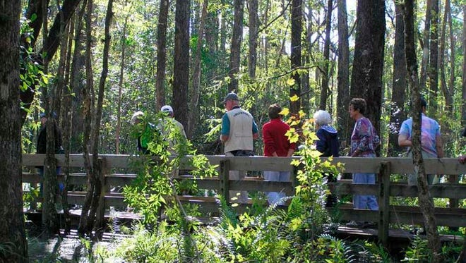A group takes a tour of Six Mile Cypress Slough Preserve. Courtesy of leegov.com