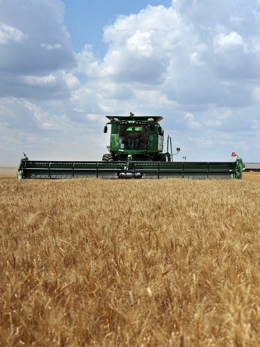 636409963000825421-Wheat-crop-2.jpg