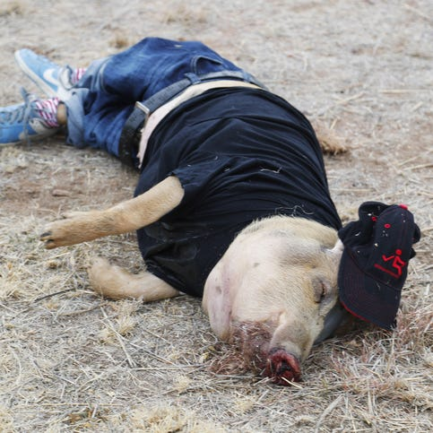 What dead pigs can teach us about missing bodies in the Arizona desert