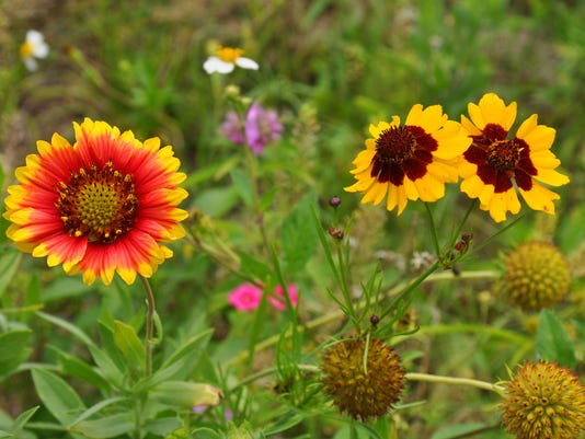 Roadside_Wildflowers__chall@pnj.com_1