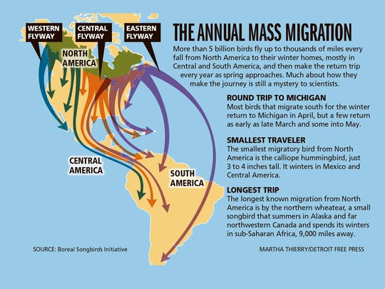 The annual mass migration