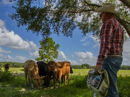 Local farmer Bryna Beer II, checks on some of his cattle