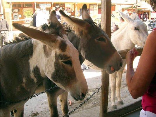 Arizona burros