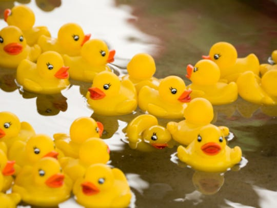 Put your duck in the water at the Duck Derby, a popular