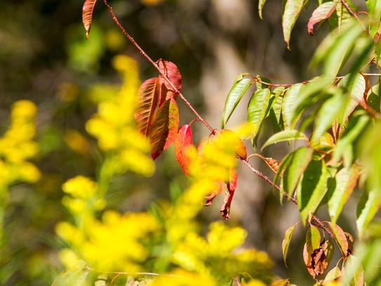 Leaves turning colors along the Wadhams to Avoca Trail.