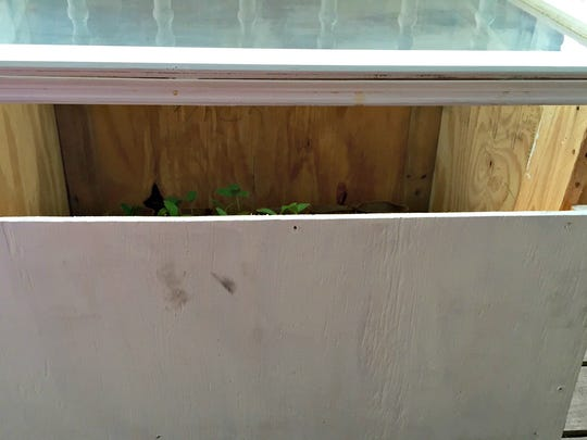 Venting the lid of the cold frame is essential for air circulation and plant growth.