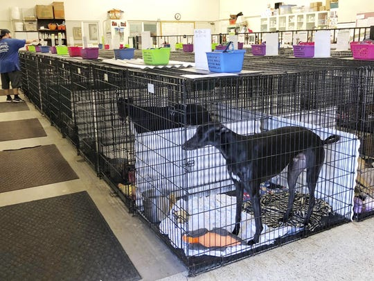 Greyhounds Blood Bank (3)