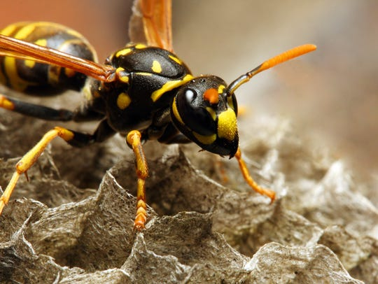 Wisconsin has no record of how many stings from bees, wasps and hornets have been fatal.