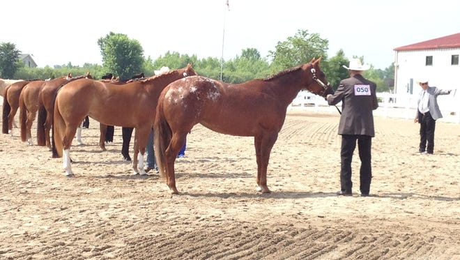 The Finale Horse Show for the Northeastern Wisconsin Pleasure Horse Association will be from 8 a.m. until 5 p.m., Aug. 2, at the Manitowoc County Expo Center.