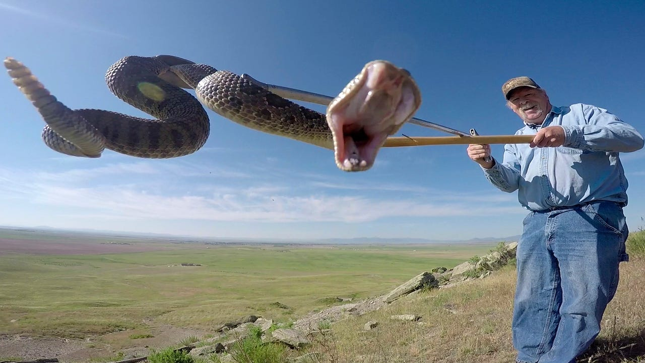 There are five species of snakes at First Peoples Buffalo jump. Learn about them with a snake expert.