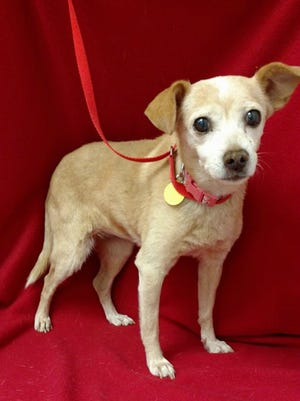 Tilly is a sweet, 17-pound, 4- to 5-year-old, female terrier mix. She gets along well with other dogs, rides well in her crate and walks very nicely on her leash. The $50 adoption fee helps cover spay/neuter, vaccinations, microchip, vetting, food and care. Call Pets Without Partners at 243-6911. Go to www.petswithoutpartners.org.