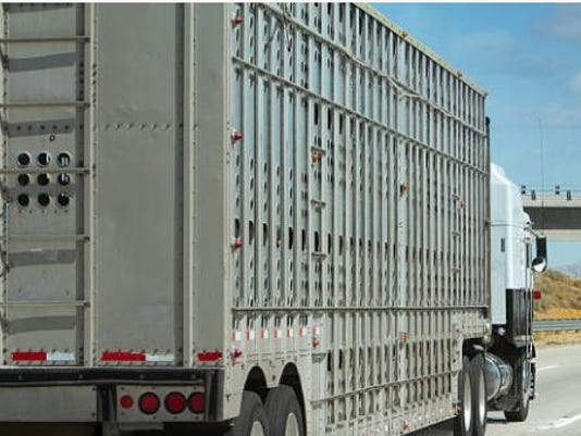 636463443503903155-cattle-truck.JPG