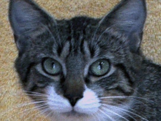 adoptable pets april 30