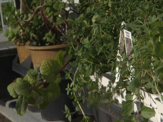 635895724385918780-herbs.jpg