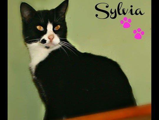 Sylvia would love to find her way into your heart and