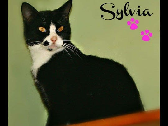 Sylvia would love to find her way into your heart and under your tree this Christmas. Do you have a nice warm bed for her? She's waiting patiently at Mary Hall Ruddiman Shelter.