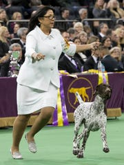 CJ, a German shorthaired pointer, is shown in the ring by his handler Valerie Nunes-Atkinson during the Best in Show competition at the 140th Westminster Kennel Club dog show, Tuesday, Feb. 16, 2016, at Madison Square Garden in New York. CJ won Best in Show. (AP Photo/Mary Altaffer)