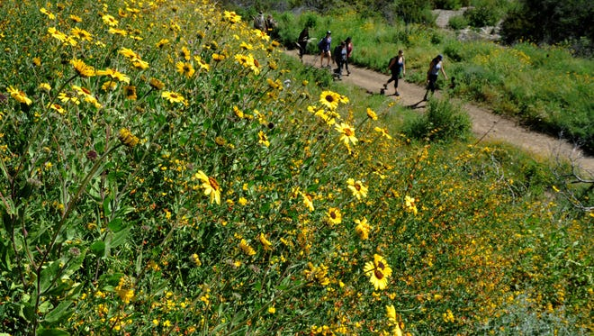 Hikers pass near blooming wildflowers at La Jolla Canyon Trail at Point Mugu State Park. Throughout Southern California, this year has been a fantastic one for flowers.