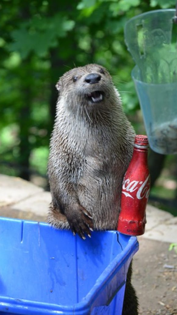 People brought recyclables to the zoo earlier this year.