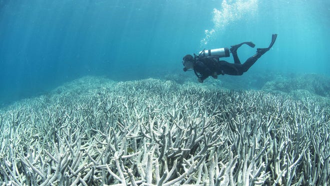 This undated handout photo released on April 20, 2016 by XL Catlin Seaview Survey shows a diver checking the bleached coral at Heron Island on the Great Barrier Reef.  Large parts of Australia's Great Barrier Reef could be dead within 20 years as climate change drives mass coral bleaching, scientists warn.