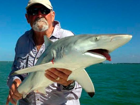 This blacktip shark was one of two, plus lemon and