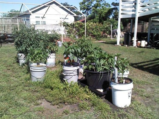 Ve able Container Garden 1
