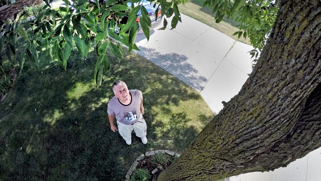 Dick Seidemann of Sheboygan looks over his ash tree Tuesday August 16, 2016 in Sheboygan.  Seidemann said he has recently called the city about the condition of a crack in the tree's trunk.  He added that he regularly inspects the tree for the Emerald ash borer.