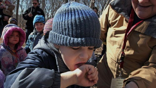 Noah Hughes tastes maple sap during a field trip by preschool students at Risen Savior Lutheran Pre-school in Franklin, Wisconsin who made a visit to the Wehr Nature Center in Whitnall Park in Franklin, Wisconsin, to enjoy a walk through the sugar bush to learn and taste how maple sap is transformed into syrup, Wednesday, March 18, 2015.   Wehr Nature Center is hosting Maple Sugar Days on Saturday, March 28th and Sunday March 29th from 1 p.m. to 4 p.m. where patrons can walk the sugar bush and learn how sap transformed into syrup. In addition they can  taste pure maple syrup on a pancake as well as purchase maple cotton candy and other treats. The cost is $6 per person and $3 for parking.  Milwaukee Journal Sentinel photo by Rick Wood RWOOD@JOURNALSENTINEL.COM