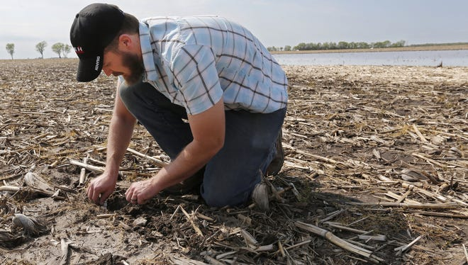 A farmer digs in the soil to check the condition of soybean seeds in the saturated ground.