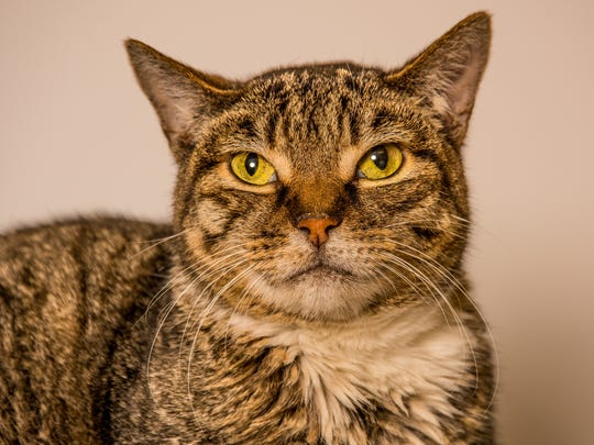 Petunia is just one angel pet in need of a committed family. If you're interested in adopting an Angel Pet, please call 775-856-2000 ext. 302 to speak with our adoption team.