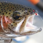 Judge supports expansion of Au Sable River rainbow trout