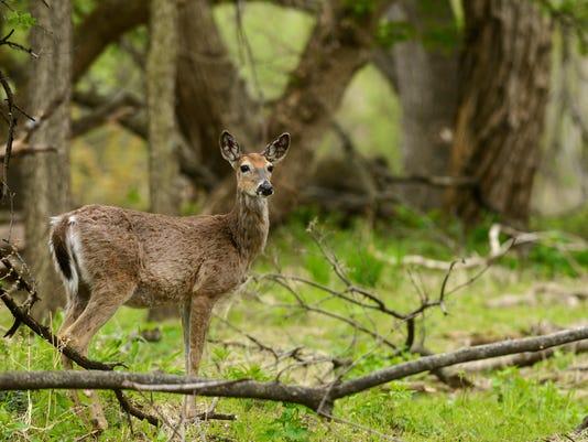 -deer04.jpg_20140515.jpg