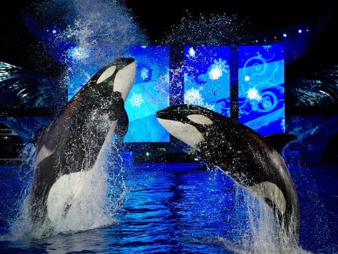 SeaWorld Orlando presents Shamu Christmas Miracles