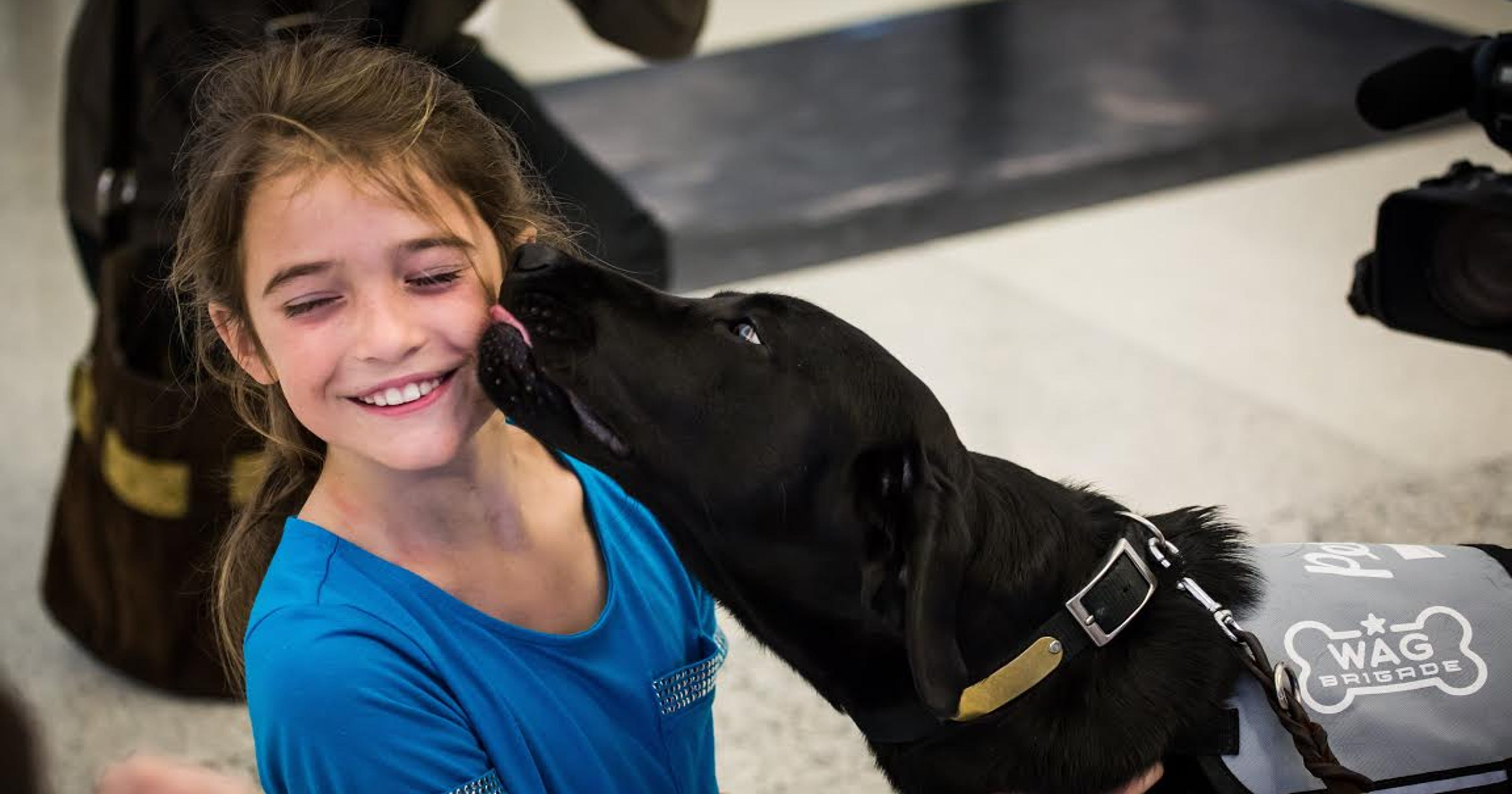 Therapy Dogs Help Soothe The Stress Of Air Travel