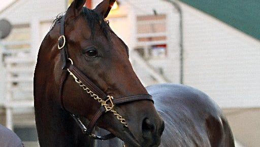 American Pharoah, the horse of the hour.