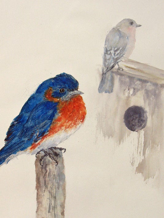 blue birds house hunting.jpg