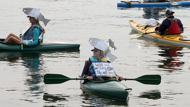Beth Stroh-Stern from Brinnon wears a salmon hat during a protest by kayakers of Cooke Aquaculture's Bainbridge Island fish pens on Saturday. The kayakers were making a statement following the release of hundreds of thousands of the company's Atlantic farmed salmon into Puget Sound last month.