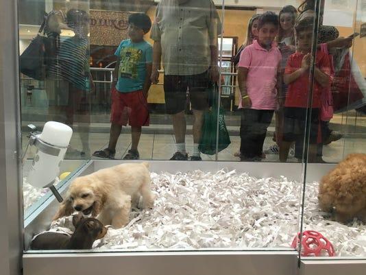 Undercover Probe Raises Questions About Some Nj Pet Shops