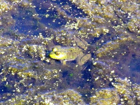 012816-it-frogwatch.jpg
