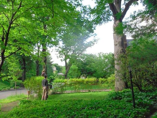 033116-gr-treecolumn.jpg